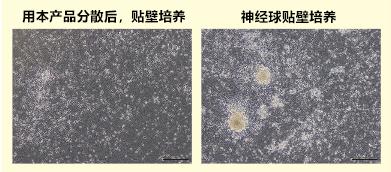 Wako神经细胞用分散液