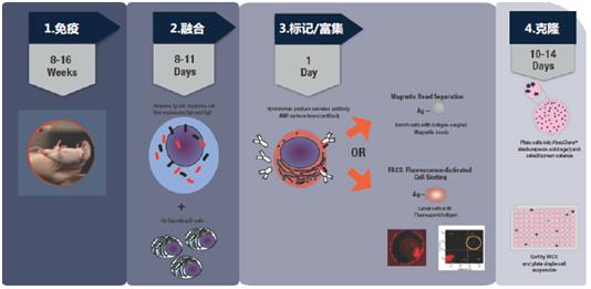 杂交瘤细胞筛选与克隆(DiSH™ Kit)
