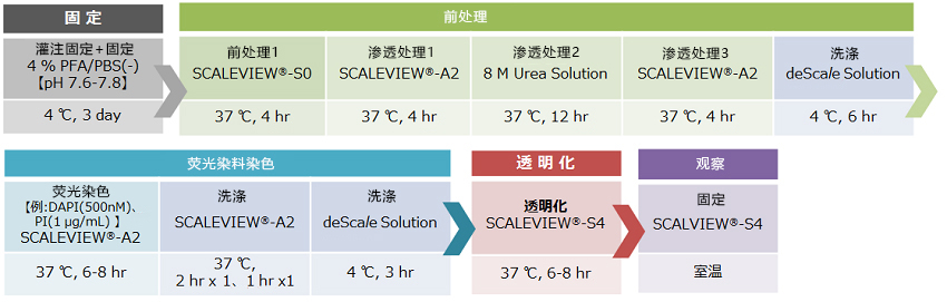 SCALEVIEW-S