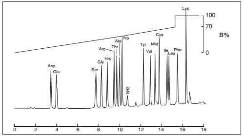 氨基酸分析柱