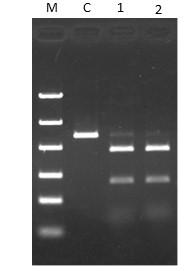 CUGA® 7 gRNA Synthesis Kit