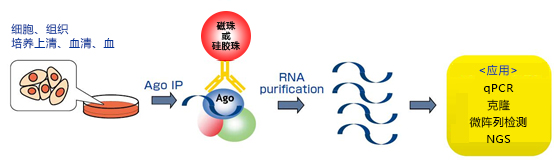 磁珠型microRNA分离试剂盒