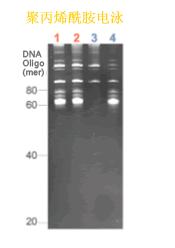 ISOGEN II RNA抽提试剂