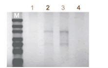 ISOIL for RNA