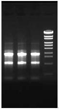 ISOSPIN Cell & Tissue RNA