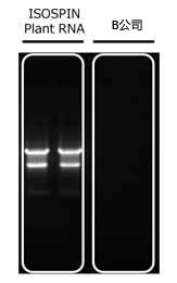 ISOSPIN Plant RNA