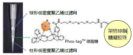 Phos-tag™ 琼脂糖吸管